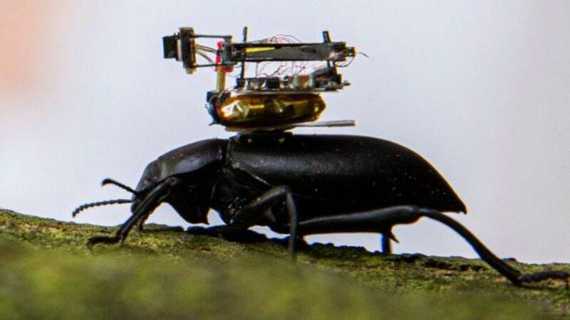 Żuk z kamerą na grzbiecie